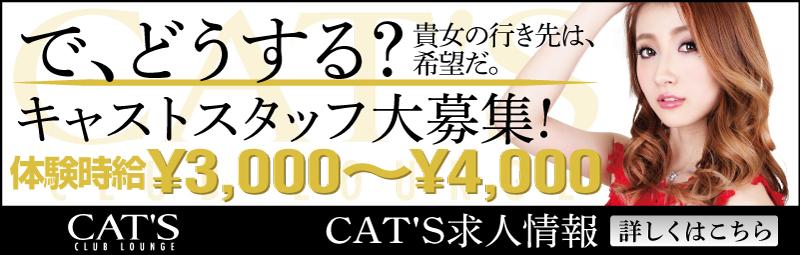 club lounge CAT'S(クラブラウンジキャッツ)の求人情報